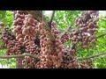 富安省把榔色果园打造成为可持续发展旅游产品