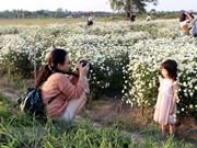 南定省雏菊花园颇受年轻人的喜爱