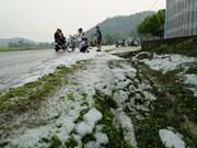 组图:奠边省多处稻田和花园被冰雹覆盖