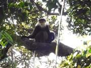 组图:昆嵩省昆伯陇森林的生物多样性宝库