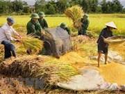 组图:越南人民军队帮助人民展开劳动生产活动  助推经济发展