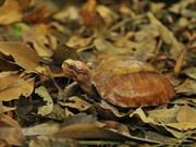 组图:菊芳龟类保护中心——珍稀龟类之家