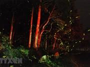 组图:闪闪发光的萤火虫为菊芳国家公园平添一股浪漫气氛
