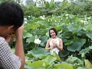 组图:河内郊区的白莲花绽放让人迷醉