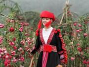 组图:来沙坝亲眼目睹越南最大玫瑰谷