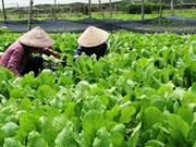 胡志明市发挥城市农业的优势