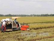 九龙江三角洲地区国际农业节将于明年3月在芹苴市举行