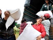 政府总理批准向平定省洪灾灾民提供两千吨大米紧急援助
