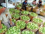 为越南水果寻找在世界市场上的立足之地