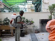 越南卫生部:寨卡病毒迅速蔓延或将成为流行病
