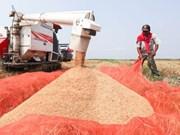2017年老挝大米出口量预计达40万吨
