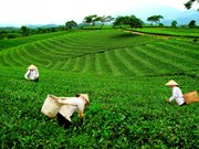 新疆茶区被列入太原省旅游景区名录