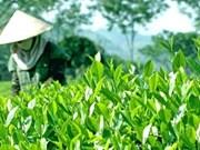 太原省加大有机农产品产销力度