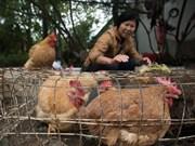 越南大力采取措施 严防H7N9禽流感