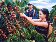 加大得乐邦美蜀咖啡在世界市场上的品牌保护力度