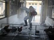 河内市举行人感染甲型H7N9禽流感防控演练