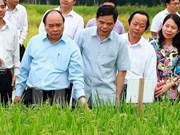 越南政府总理阮春福:越南稻谷产业正进入革新阶段