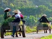 国际农业发展基金会协助越南农民提高经济收入