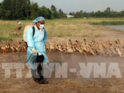 河静省一乡一坊发生H5N1禽流感疫情超过2000只家禽被扑杀