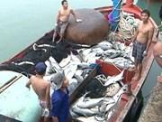 越南乂安省渔民开始恢复正常渔业捕捞活动