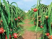 越南果蔬出口面临的机遇