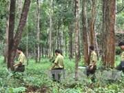 西原地区力争实现新造林面积达1.25万多公顷的目标