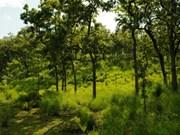 西原地区天然林面积继续减少