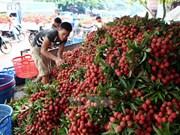 越南企业在对澳大利亚出口产品需了解该国相关规定