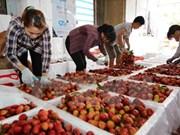越南对中国出口9500多吨荔枝