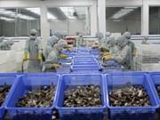 2017年前5月虾类出口增长缓慢