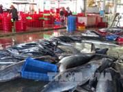 越南远洋捕捞行业发展提案意见征求会在巴地头顿省举行