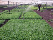 河内市将为各家企业对高科技农业投资创造便利