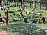 黑熊的新屋