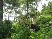 加强森林保护与发展工作