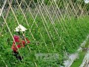 北江省斥资1.5多万亿越盾用于进行高技术农业园区规划