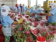 火龙果——越南主要的出口水果产品