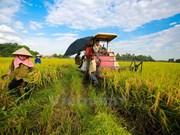 今年全国水稻产量可达4410万吨