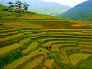 越南旅游业努力加强国内外旅游目的地的对接