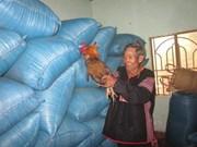 莫农族取稻草礼仪——西原地区一道美丽的文化风景线