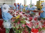越南新鲜火龙果在澳大利亚各家商店上架出售
