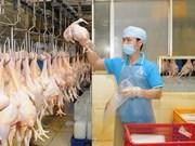 越南鸡肉迎来出口欧盟市场机会
