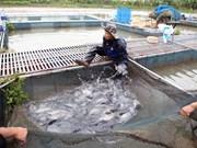 越南芹苴市与巴西马拉尼昂州加强水稻生产研究和水产养殖领域合作