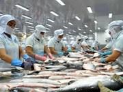 安江省将查鱼培育为主要出口产品