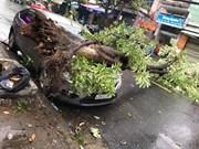 2017年APEC会议:岘港市积极应对恶劣天气及自然灾害