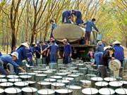 政府总理批准越南橡胶工业集团2016—2020年经营生产计划