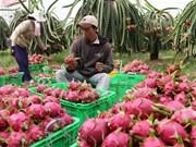 越南扩大蔬果出口