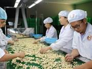 柬埔寨成为越南腰果原料第五大供应国