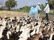 柬埔寨发现H5N1禽流感