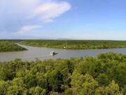 金瓯省采取措施来保护沿海防护林