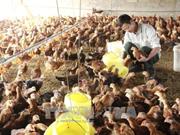 联合国协助越南开展新农村建设国家目标计划